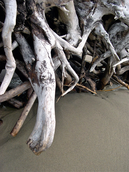Driftwood Roots