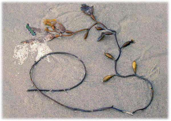 Calligraphic Seaweed