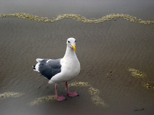 Gull Portrait