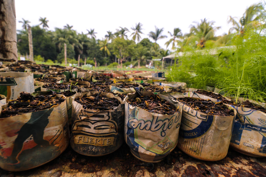 "Using cut-up soda and beer cans as planting pots at a local farm in Artemisa, Cuba. It is hard to find planting pots so the owners needed to find another way to create these ""pots."""