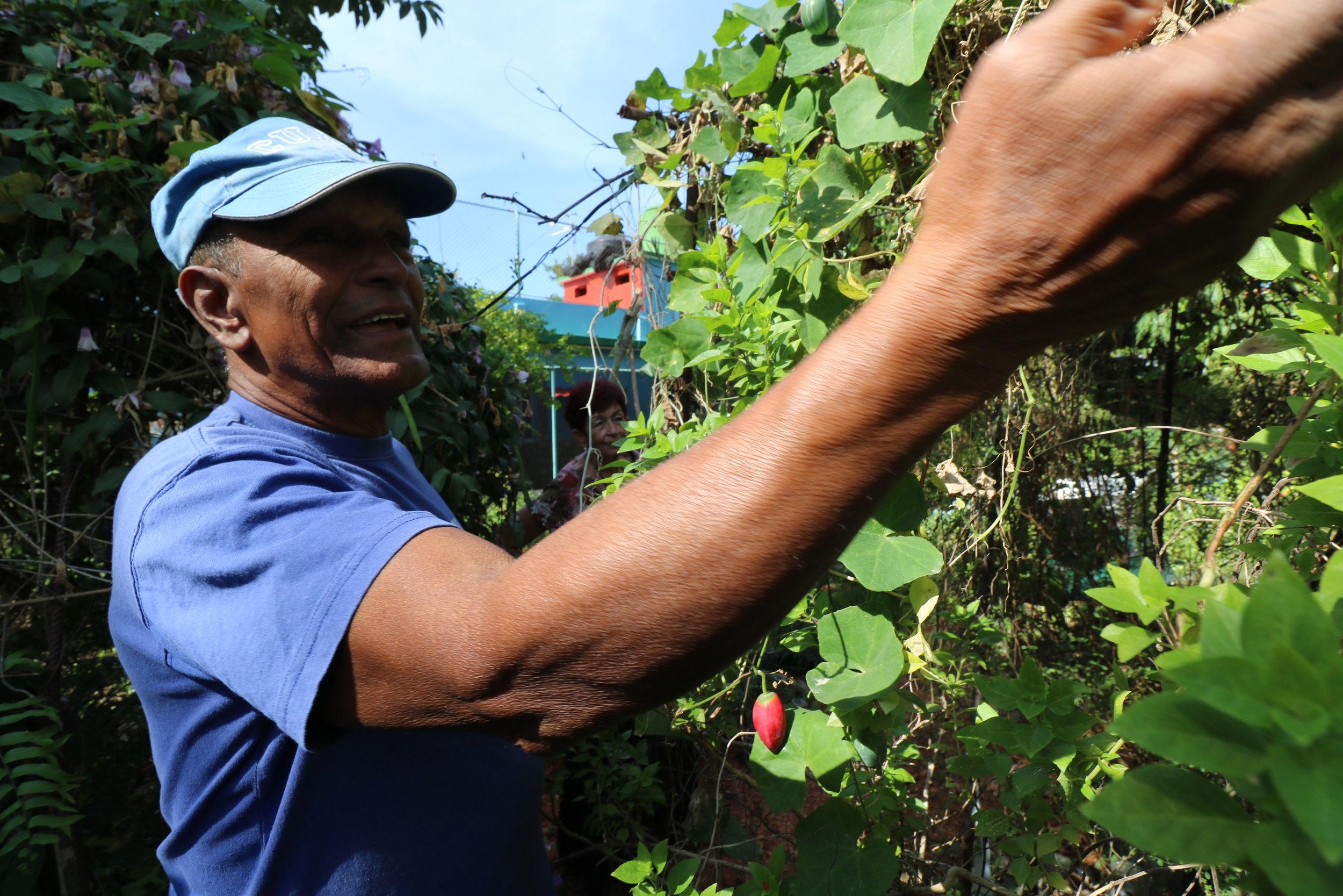 Permaculture farmer explaining his garden