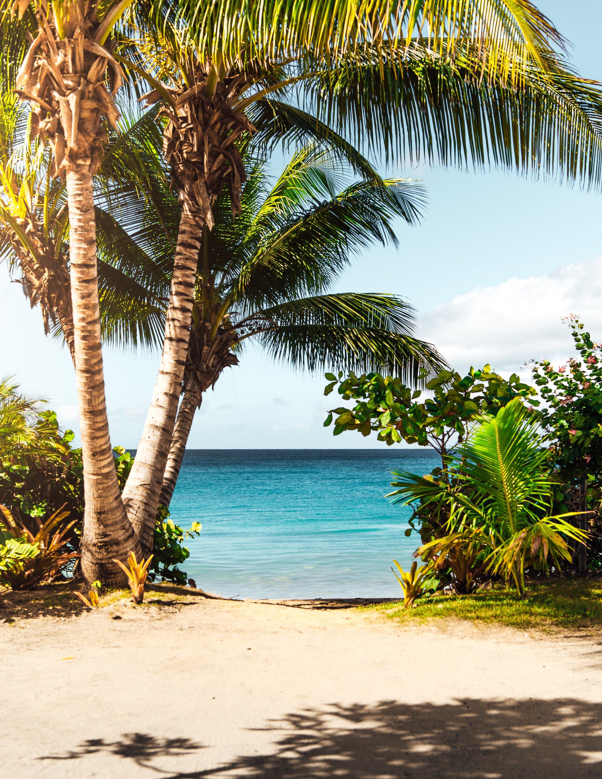 Natural Beauty - beach life