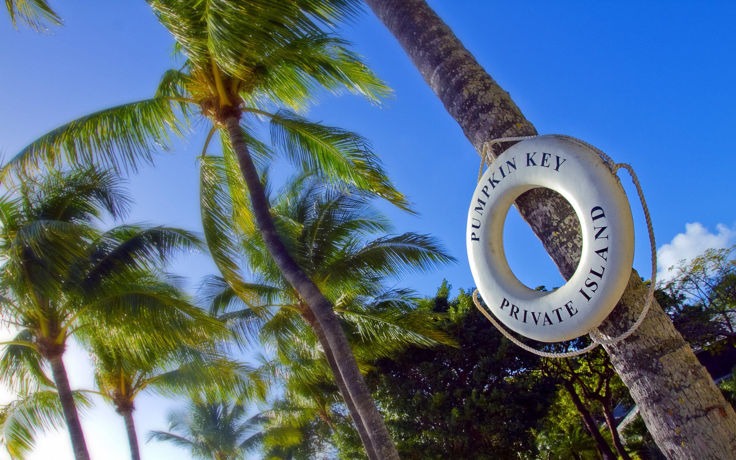 HR lifering on coconut palm.jpg