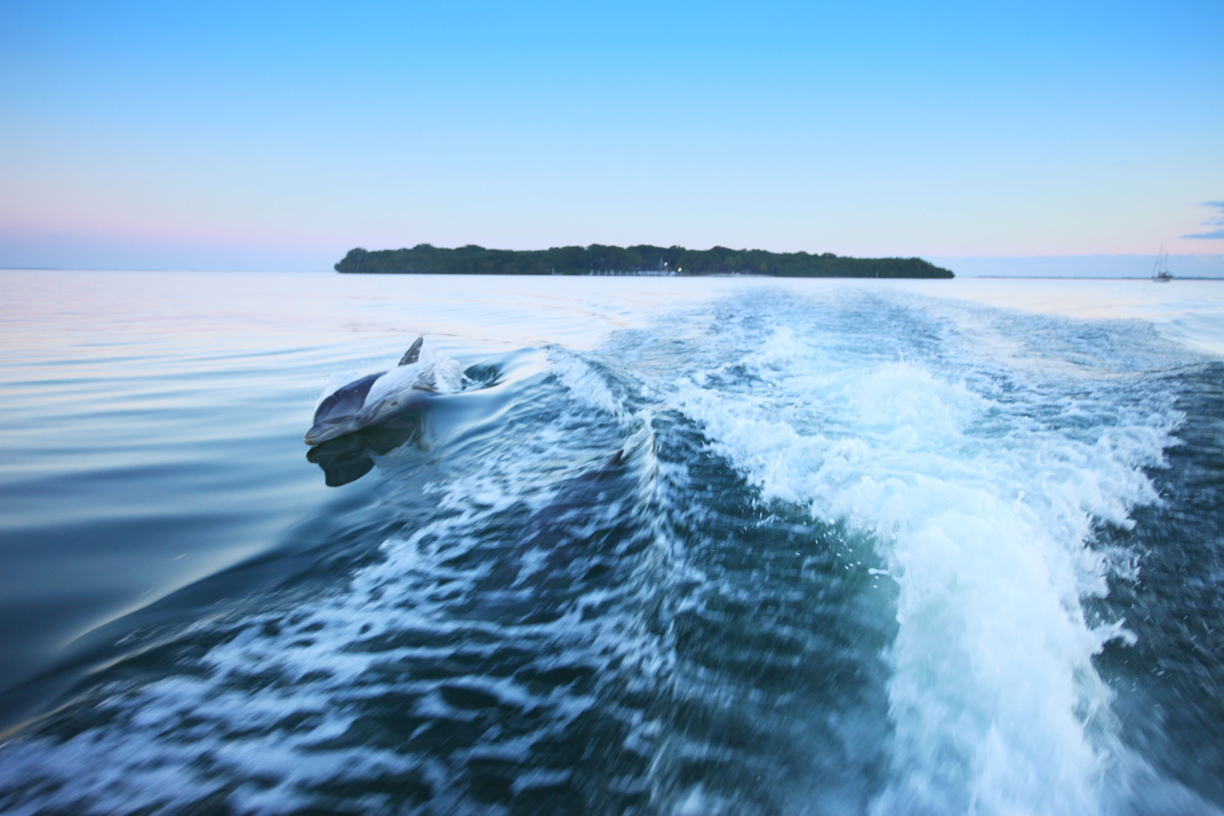 HR porpoise at dawn with island.jpg