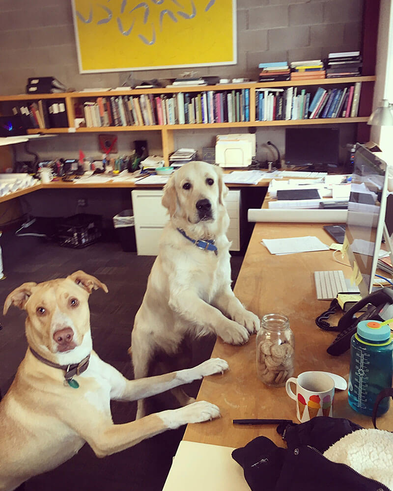 dogs-at-work.jpg