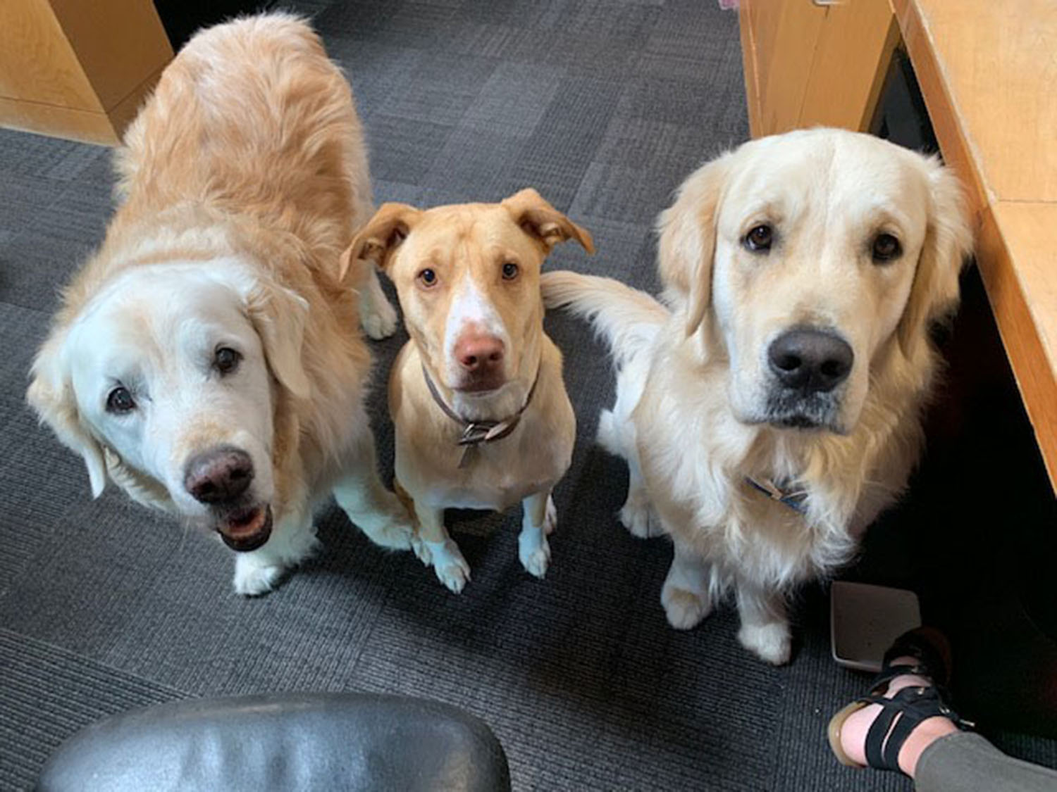 Office Dogs.jpg