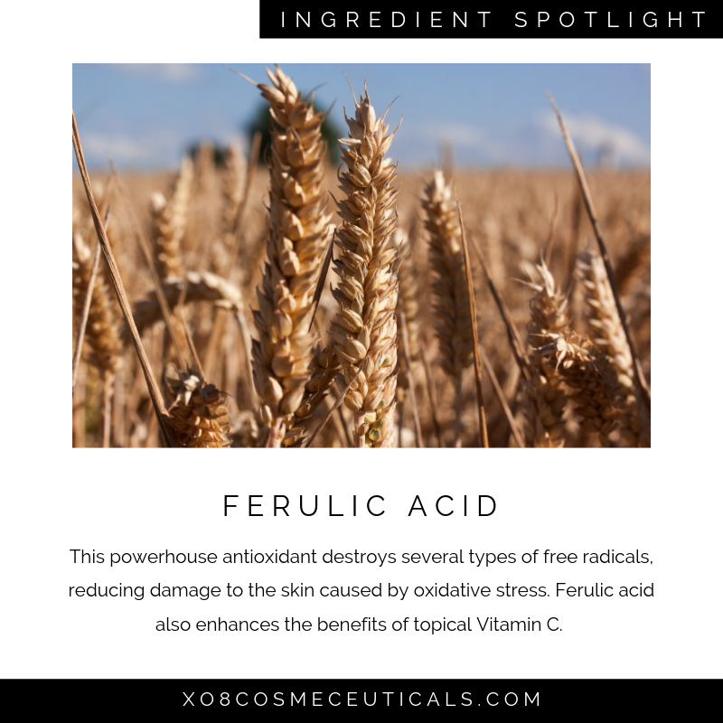 Ferulic Acid.png