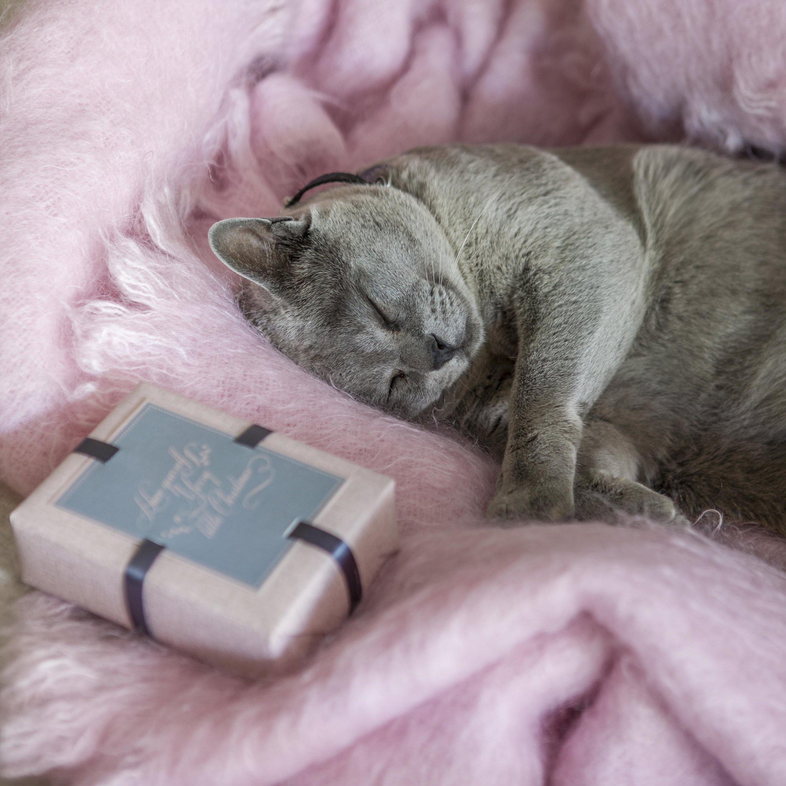 Pink_Grey_102.jpg