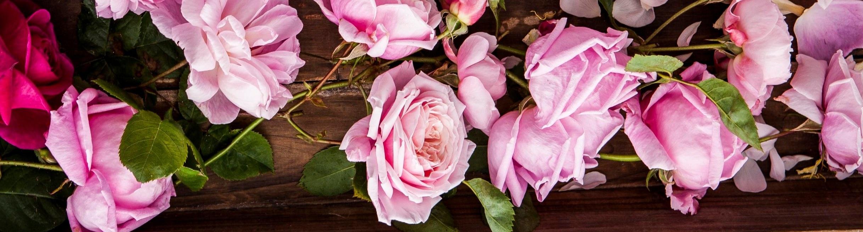 Pretty_Pink_081.jpg