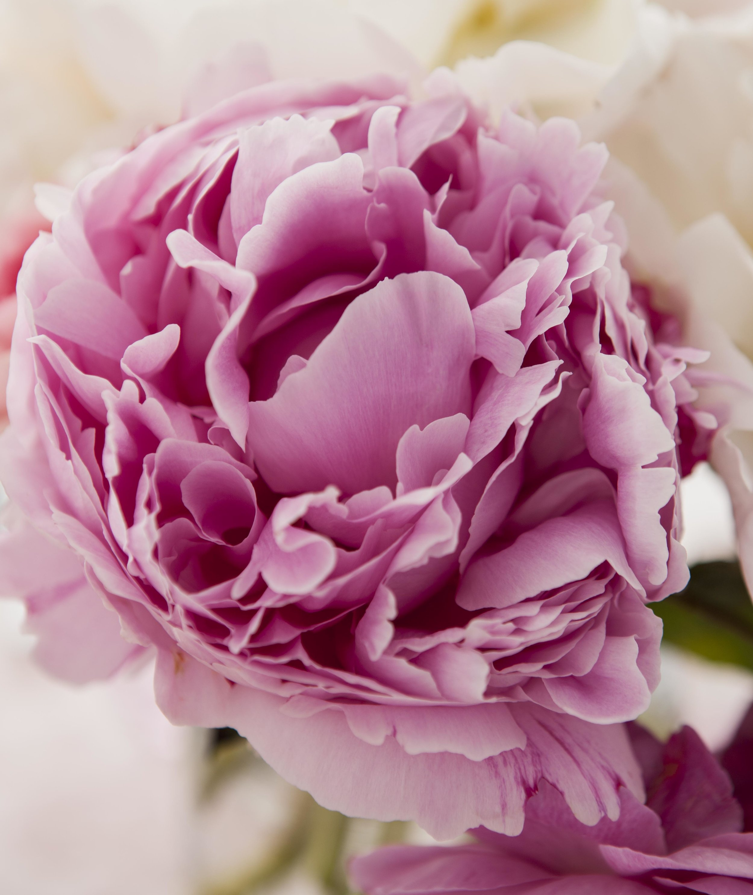 Pretty_Pink_059.jpg