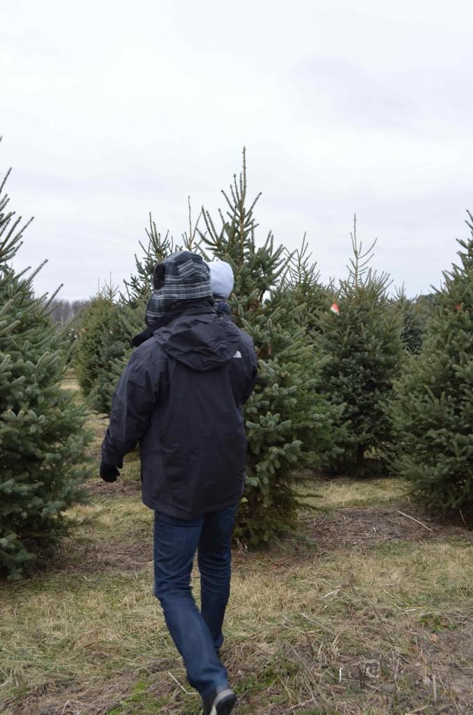 cutting tree 18