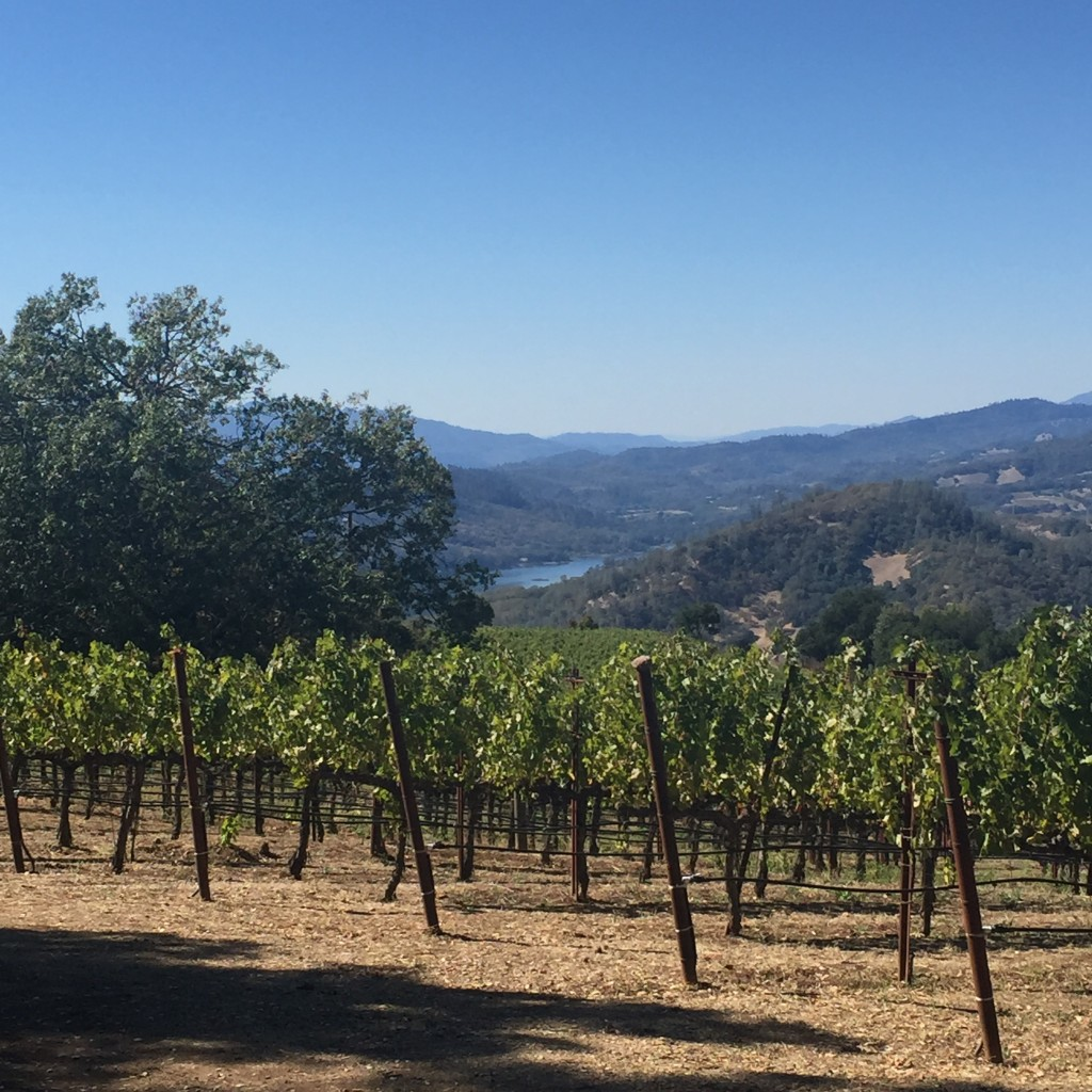 napa travel from scratch with maria provenzano