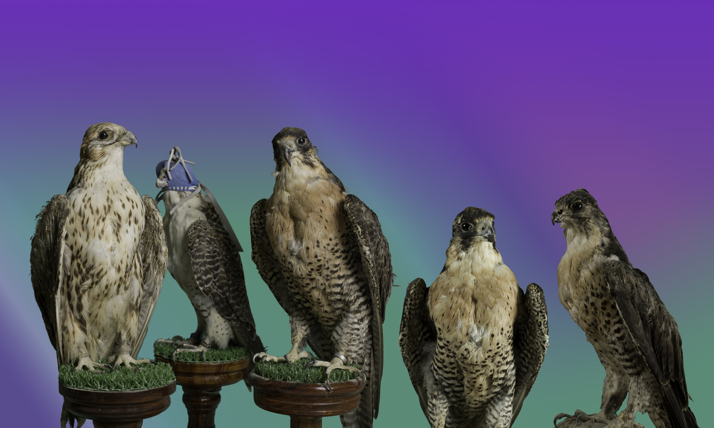 ChristtoAndrew.BirdsOfParadise.jpg