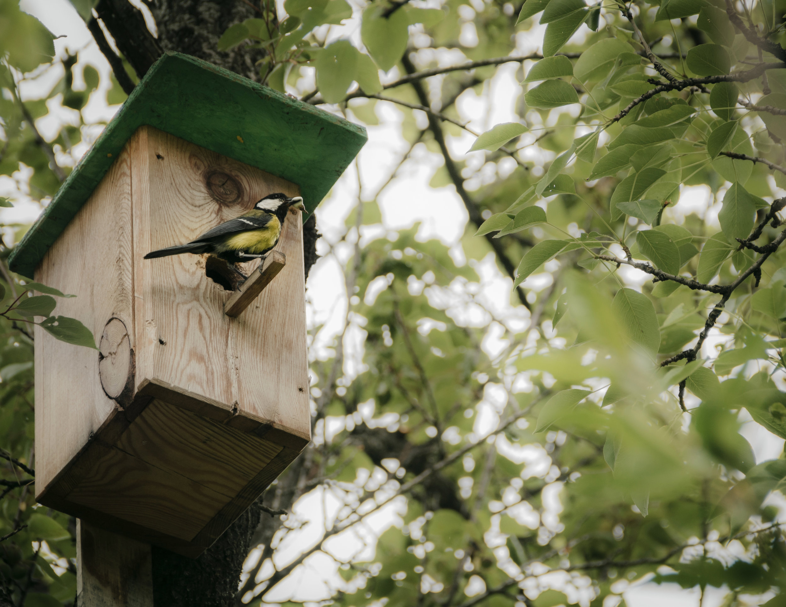 Bird in house.jpg