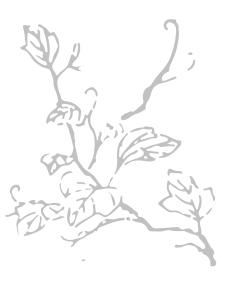 alt_branch.jpg