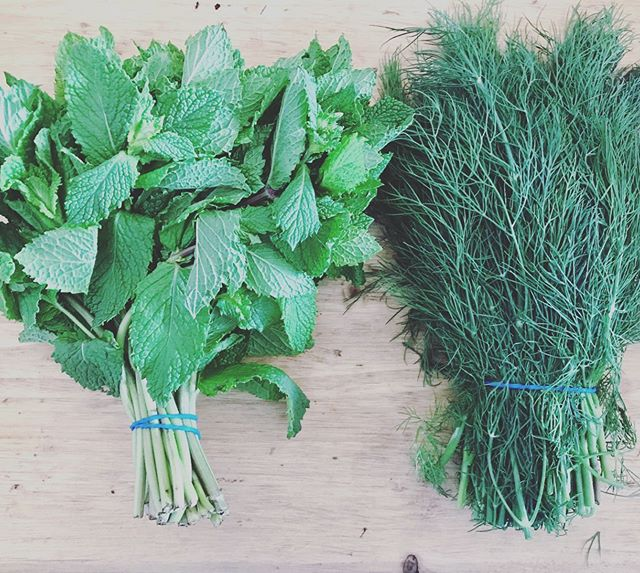 We are always using fresh herbs in our salads and soups. Often running out of space on our counters and storing them in lots of funny shaped jugs/jars 🌱