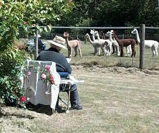alpaca farm.jpg