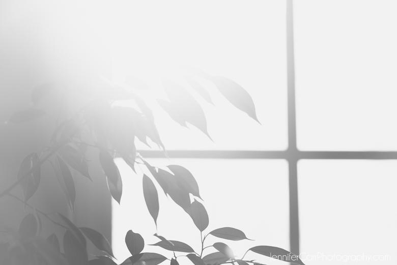 black and white bonsai tree in sunlight