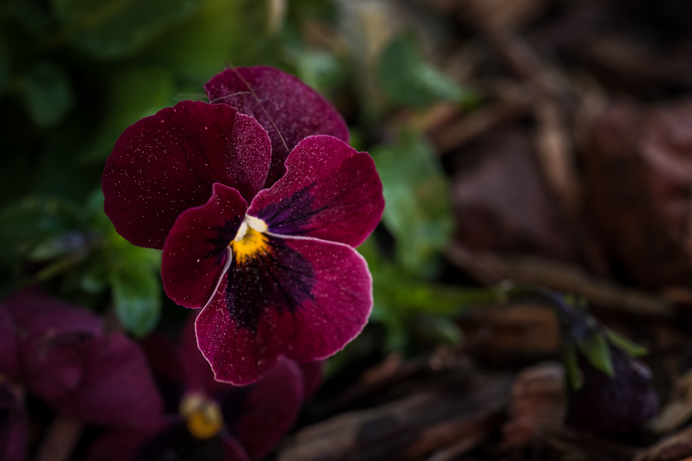 virginia beach backyard garden photography project