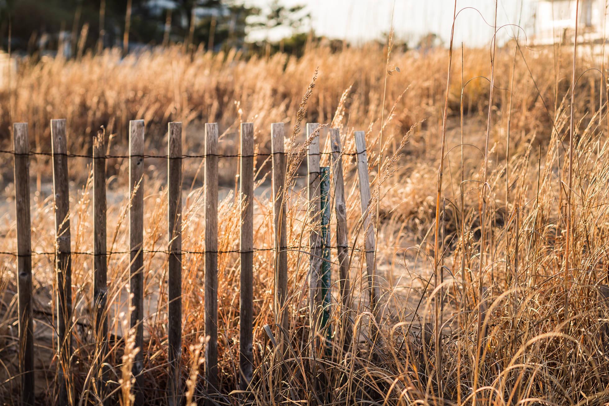 beach, virginia beach photography, nature photographer, dune fence