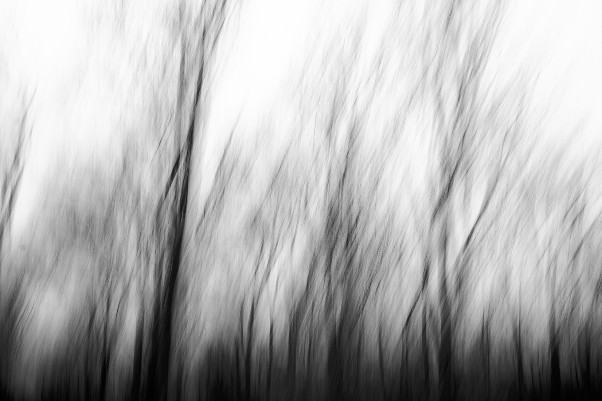 2018.01.12-Vertical-Panning--Jennifer-Carr-Photography-Virginia-Beach-3.jpg