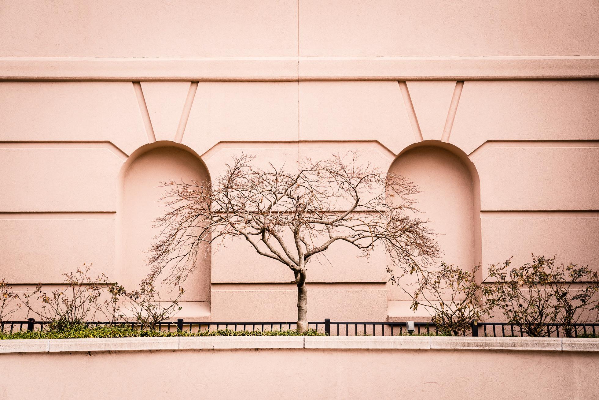 Nature photography, Japanese maple, norfolk photography