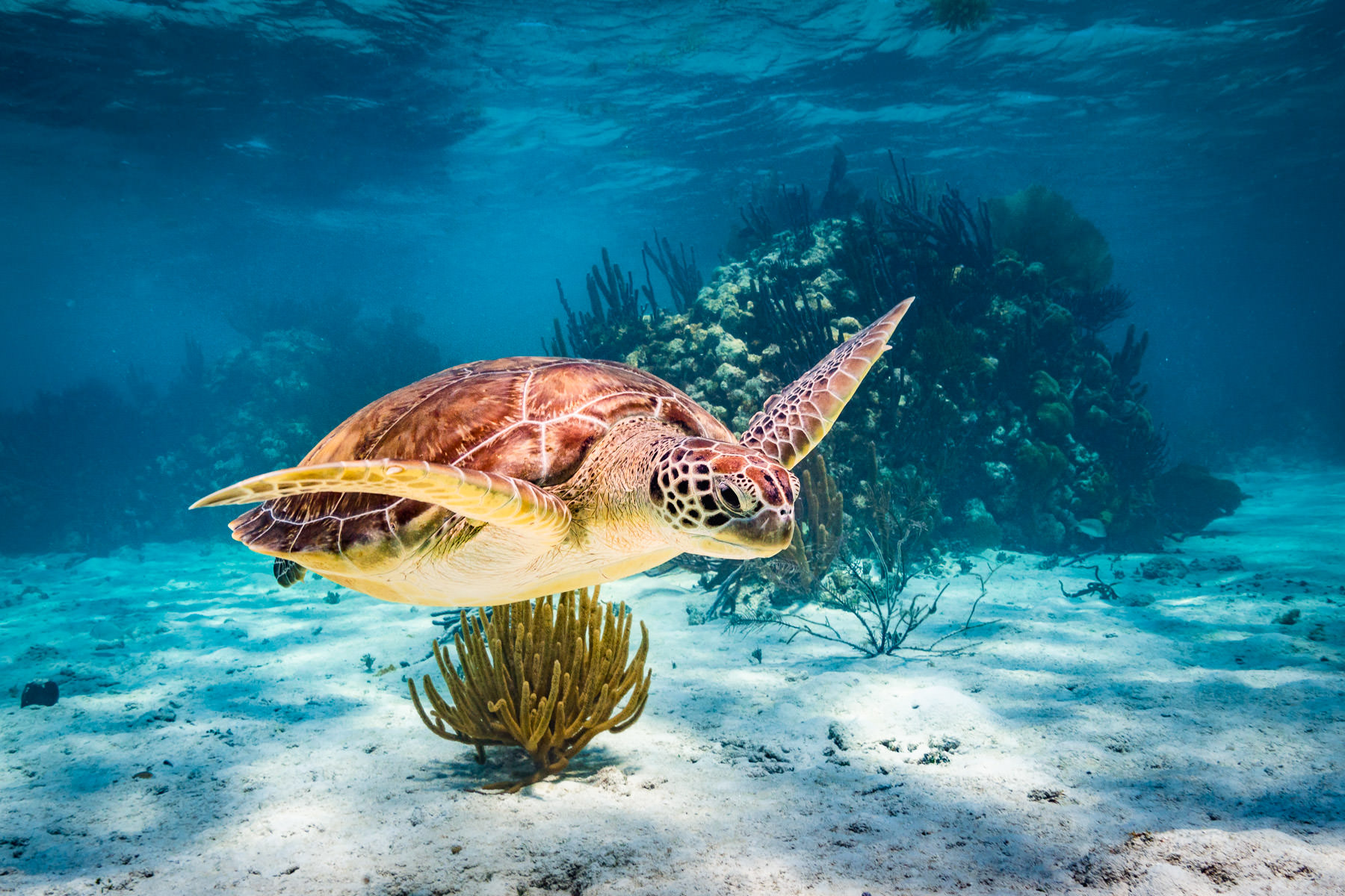 2018.05.02 Snorkling Belize © Jennifer Carr Photography-206.jpg
