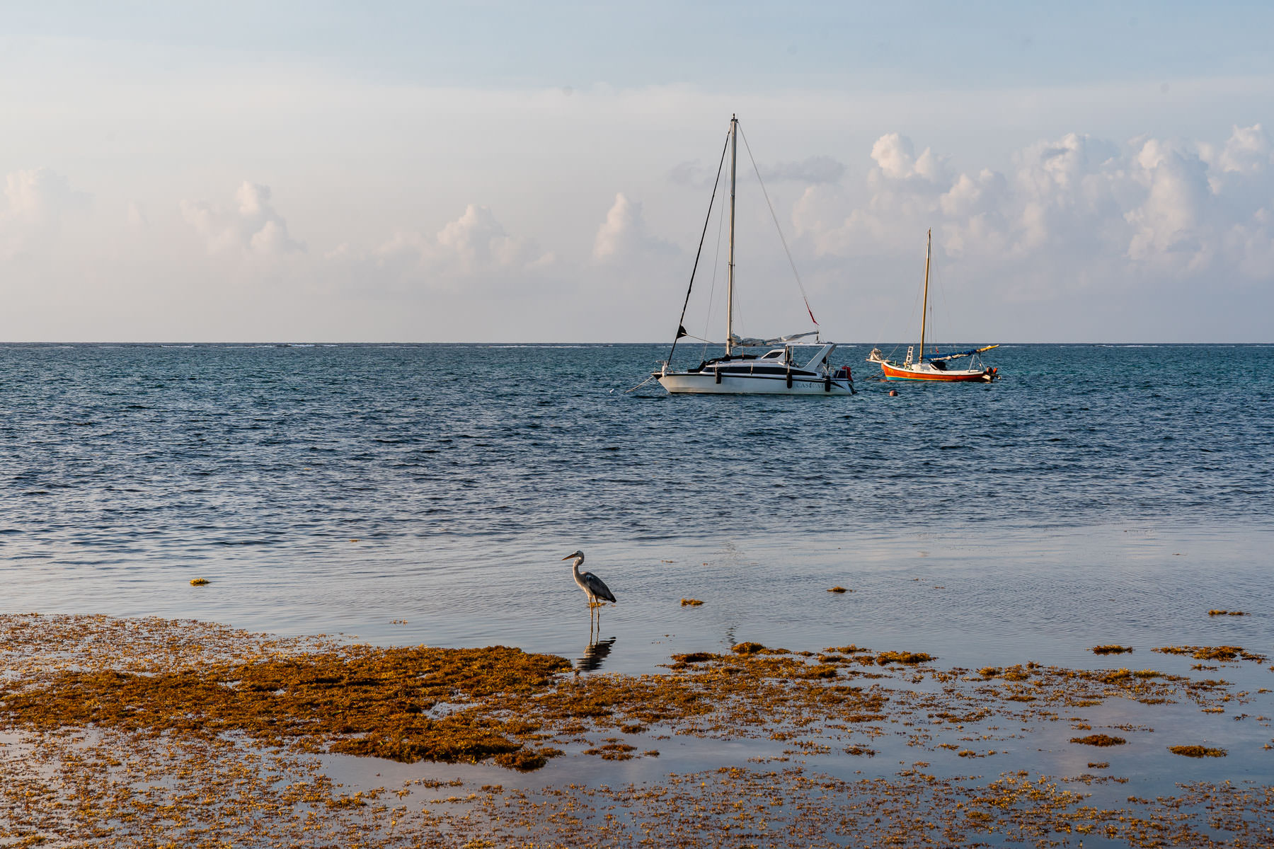 2018.04.30 Ambergris Caye San Pedro Belize © Jennifer Carr Photography Virginia Beach-12.jpg