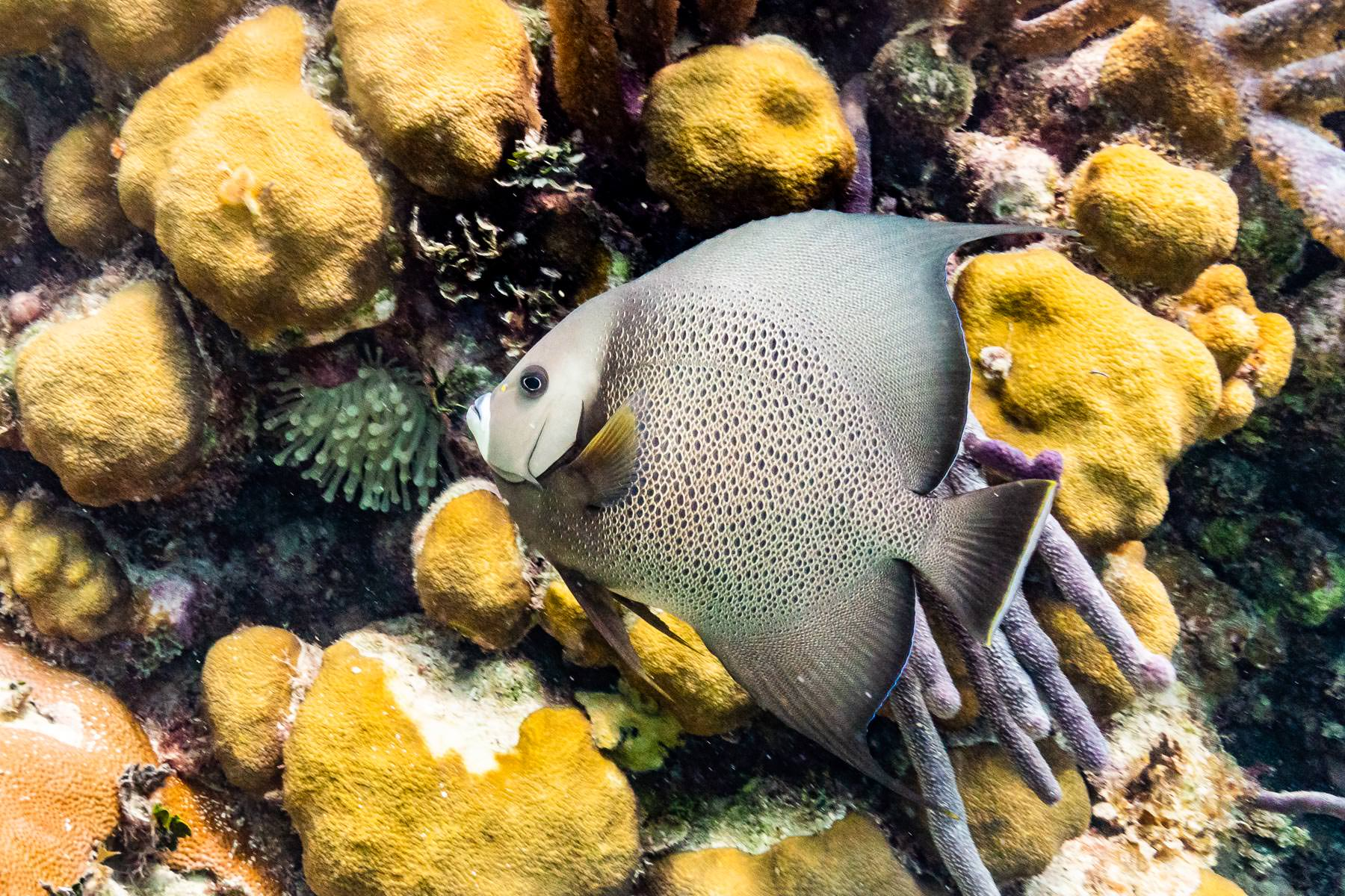 2018.04.30 Snorkling Belize © Jennifer Carr Photography-109.jpg