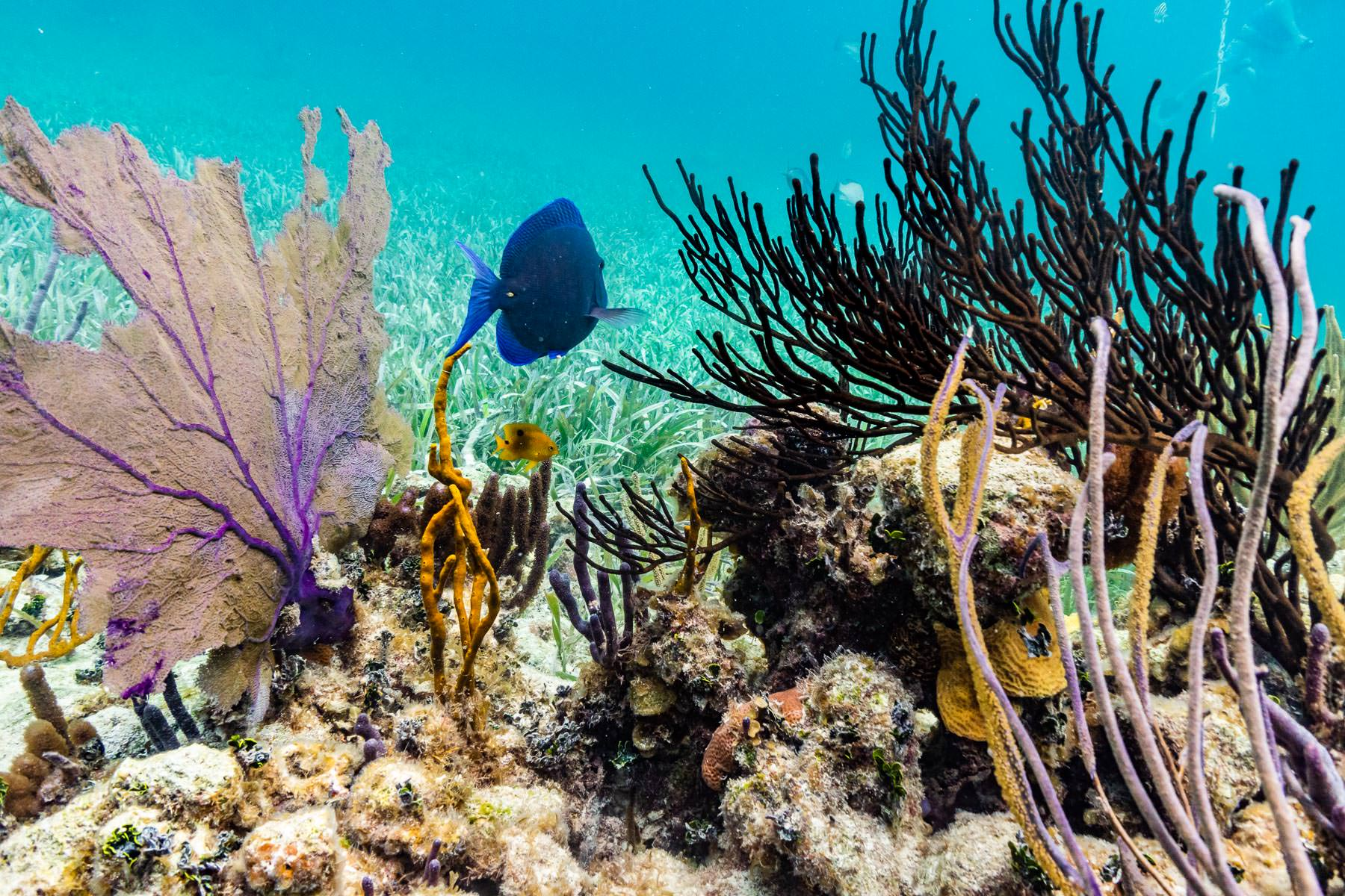 2018.04.30 Snorkling Belize © Jennifer Carr Photography-111.jpg