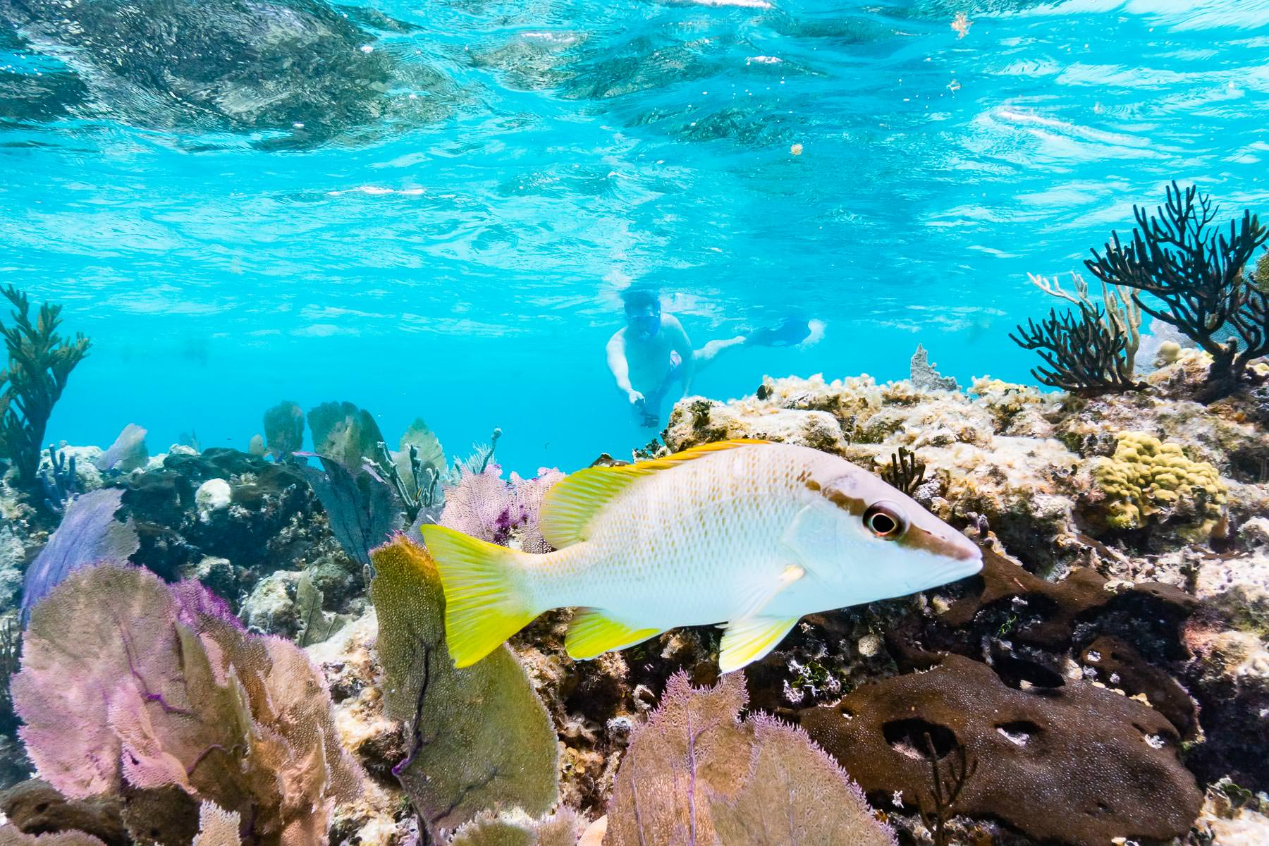 2018.05.01 Snorkling Belize © Jennifer Carr Photography-146.jpg