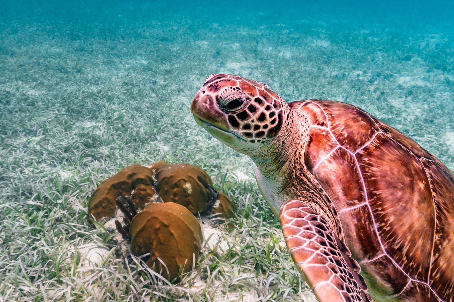 2018.05.01 Snorkling Belize © Jennifer Carr Photography-149.jpg