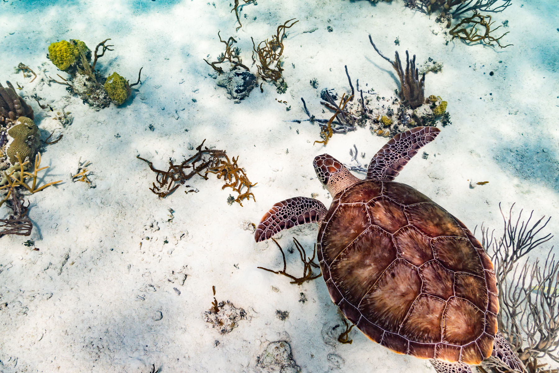 2018.05.02 Snorkling Belize © Jennifer Carr Photography-191.jpg