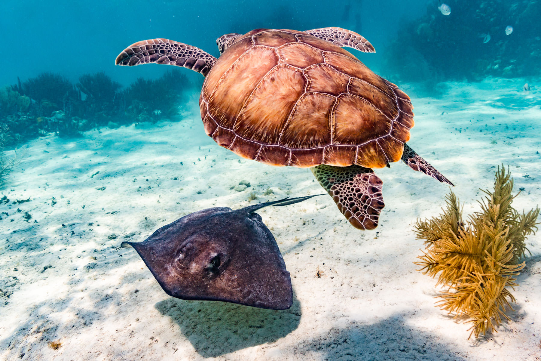 2018.05.02 Snorkling Belize © Jennifer Carr Photography-208-Edit.jpg