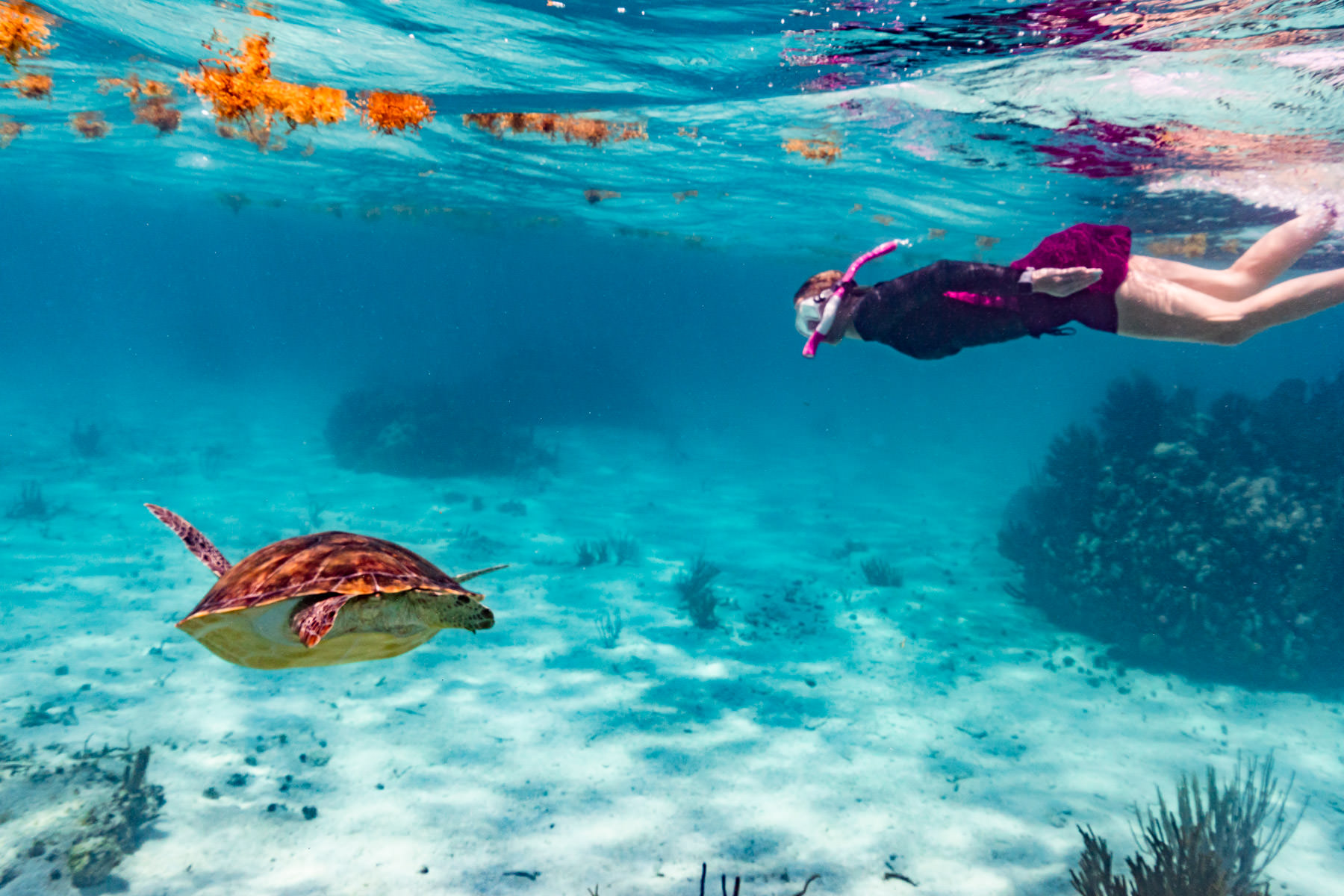 2018.05.02 Snorkling Belize © Jennifer Carr Photography-209.jpg