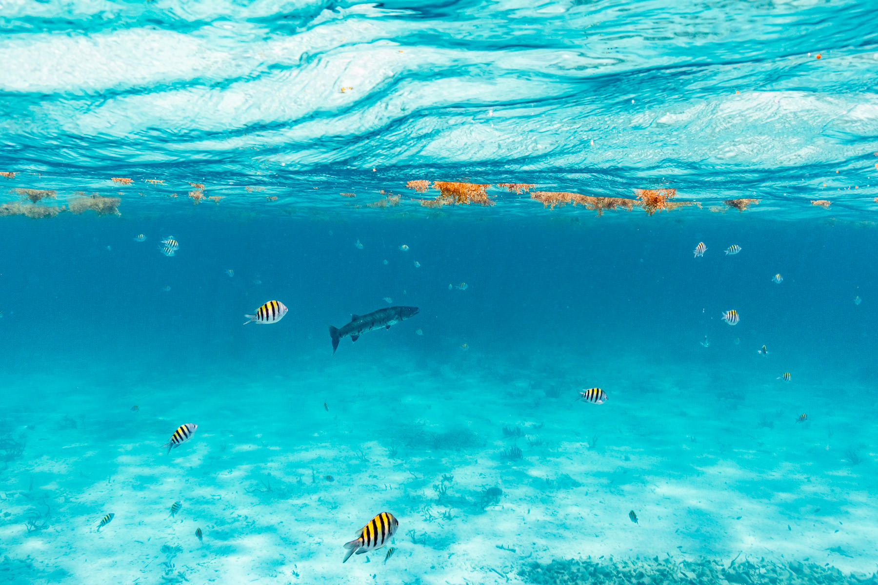 2018.05.02 Snorkling Belize © Jennifer Carr Photography-219.jpg