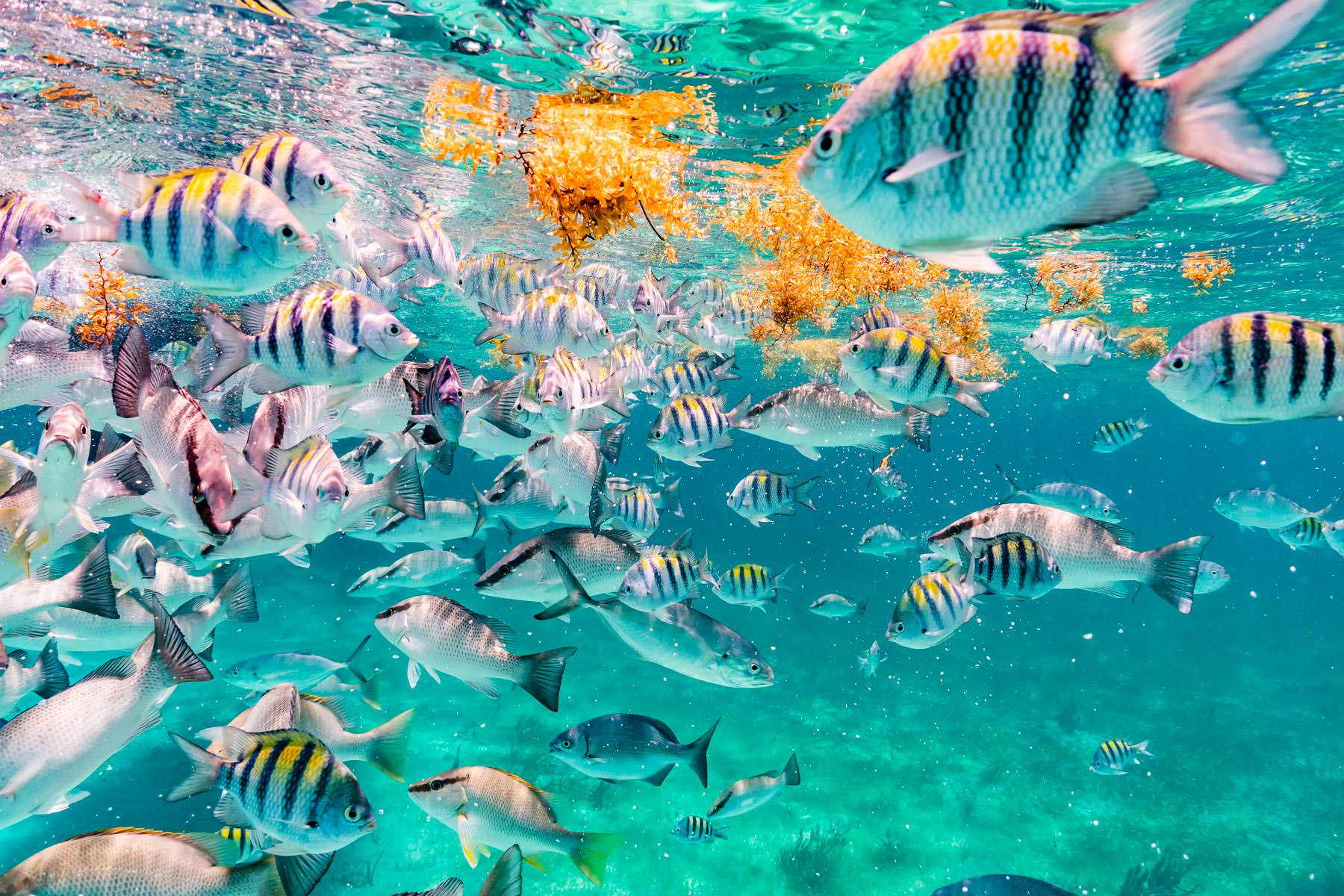 2018.05.02 Snorkling Belize © Jennifer Carr Photography-220.jpg