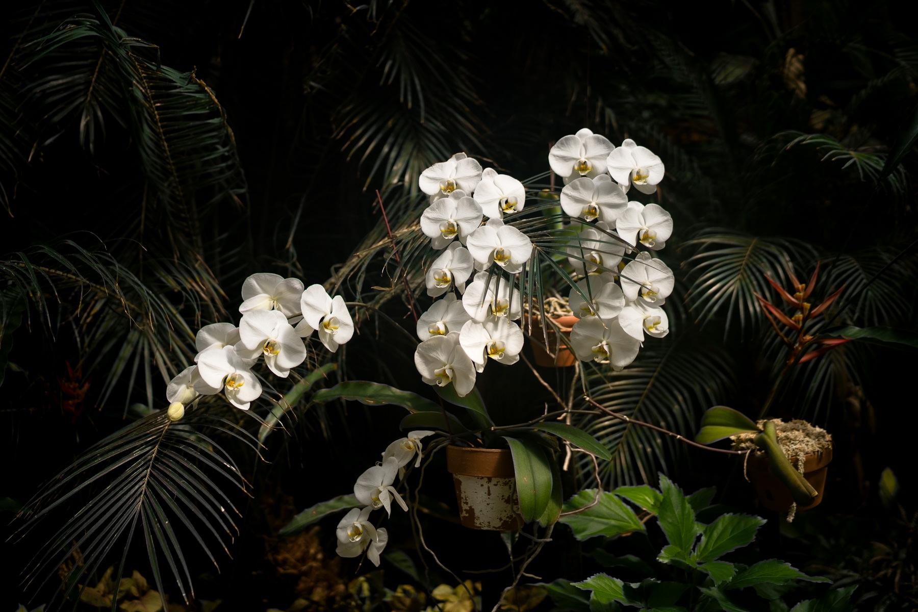 2018.04.18 Norfolk Bontanical Gardens by Jennifer Carr Photography Virginia Beach-5.jpg