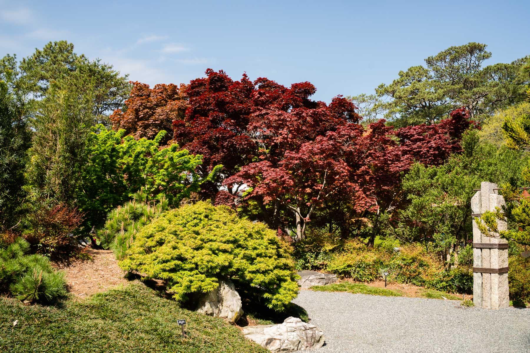2018.04.18 Norfolk Bontanical Gardens by Jennifer Carr Photography Virginia Beach-3.jpg