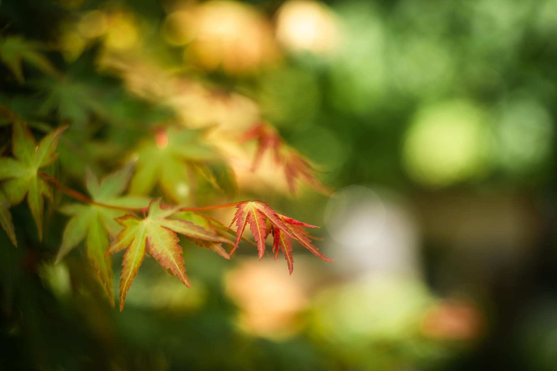 2018.04.23 Norfolk Botanical Gardens © Jennifer Carr Photography Virginia Beach-1.jpg
