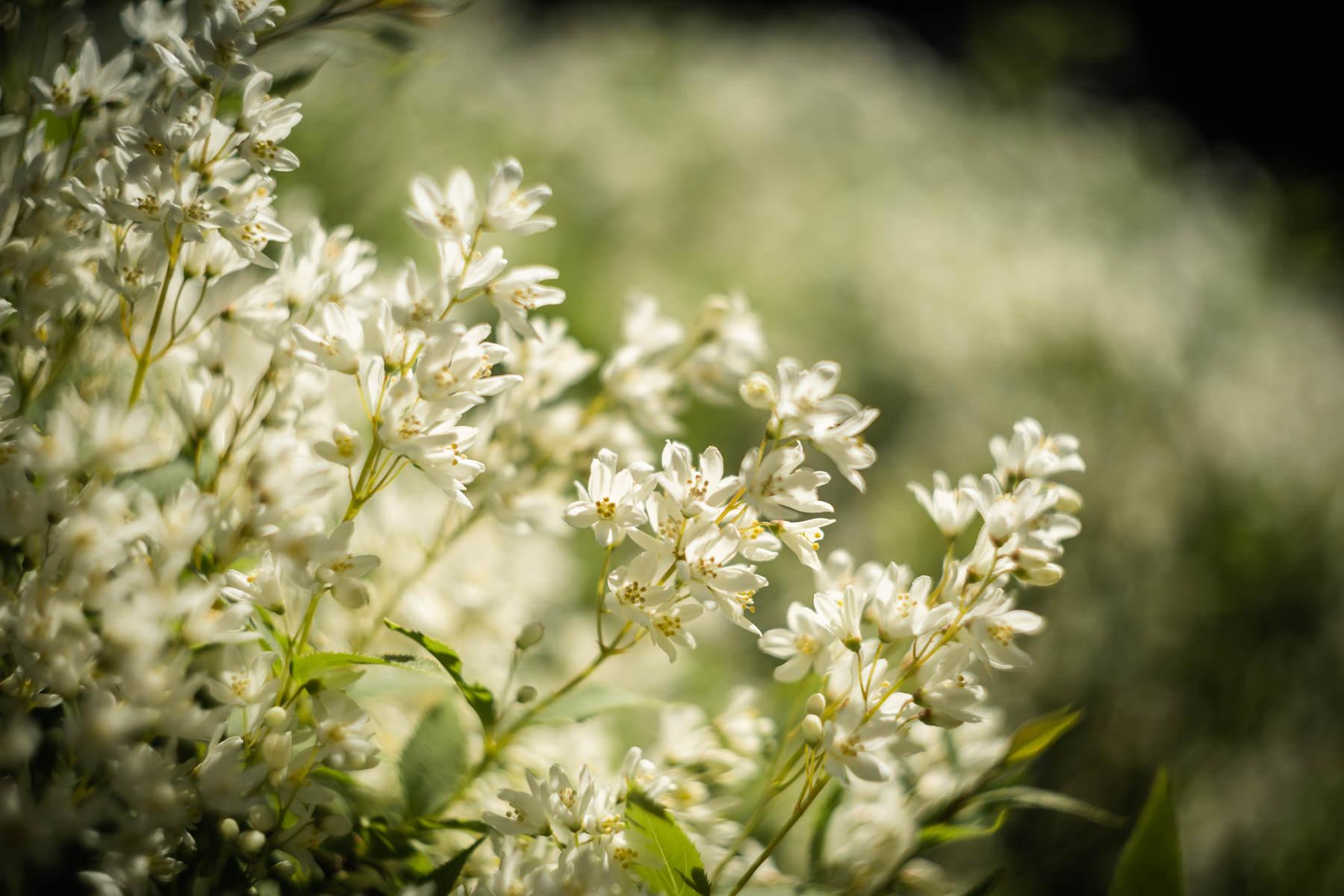 2018.04.23 Norfolk Botanical Gardens © Jennifer Carr Photography Virginia Beach-2.jpg
