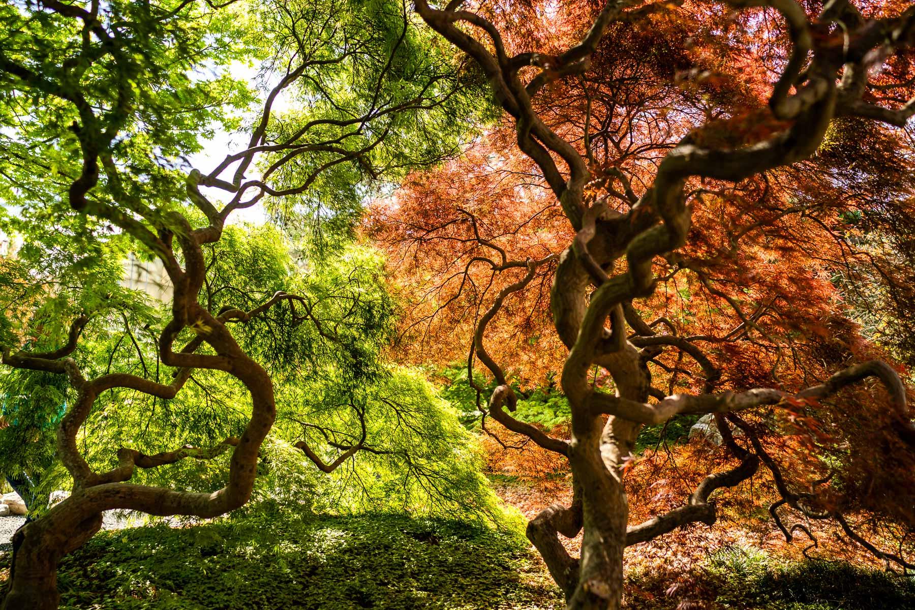 2018.04.18 Norfolk Bontanical Gardens by Jennifer Carr Photography Virginia Beach-6.jpg