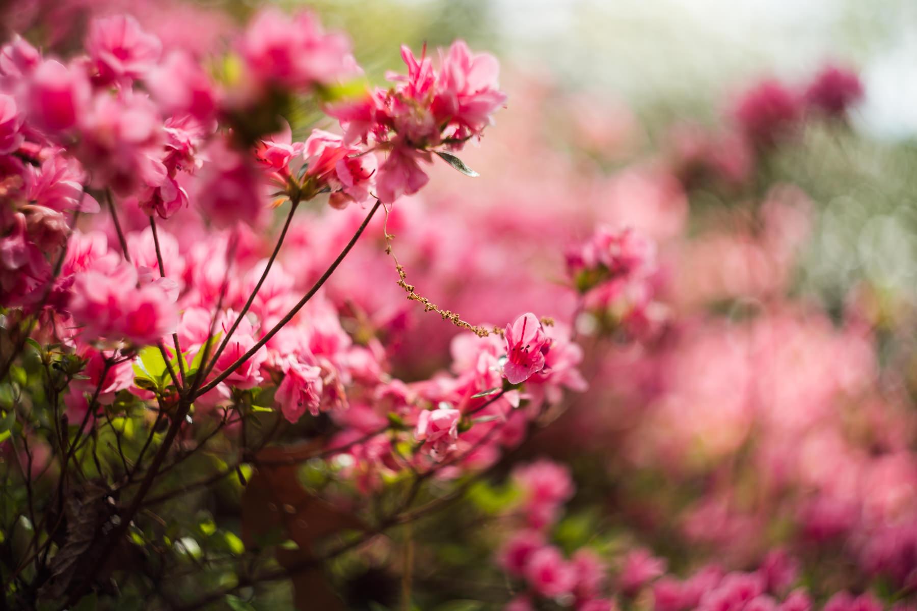 2018.04.23 Norfolk Botanical Gardens © Jennifer Carr Photography Virginia Beach-7.jpg