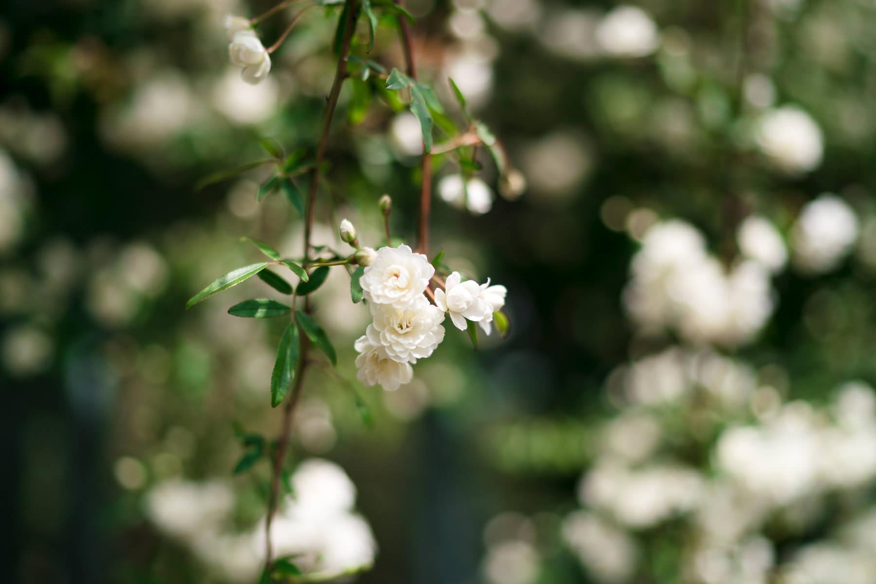 2018.04.23 Norfolk Botanical Gardens © Jennifer Carr Photography Virginia Beach-15.jpg