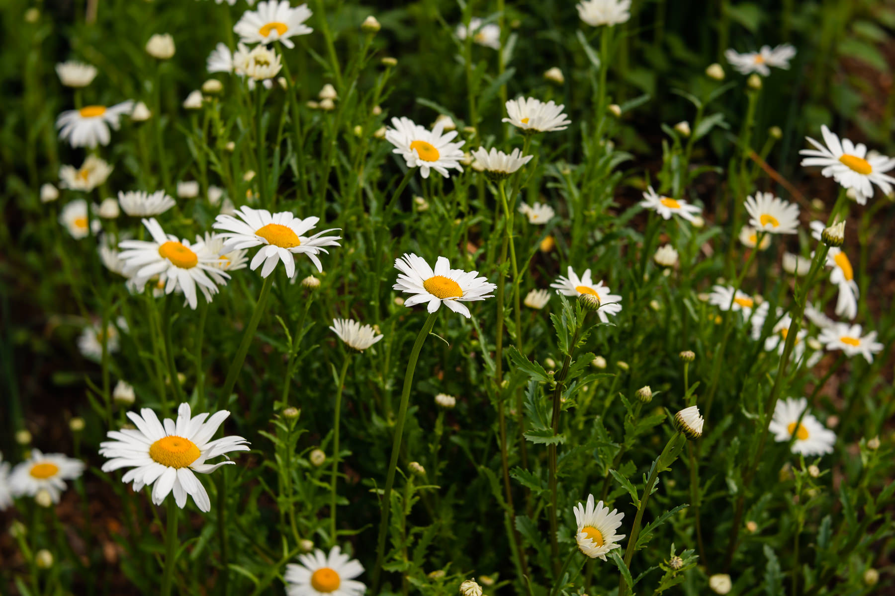 2018.04.25 Norfolk Botanical Gardens © Jennifer Carr Photography Virginia Beach-4.jpg
