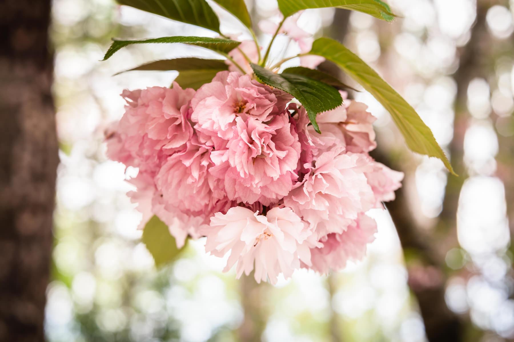2018.04.25 Norfolk Botanical Gardens © Jennifer Carr Photography Virginia Beach-6.jpg