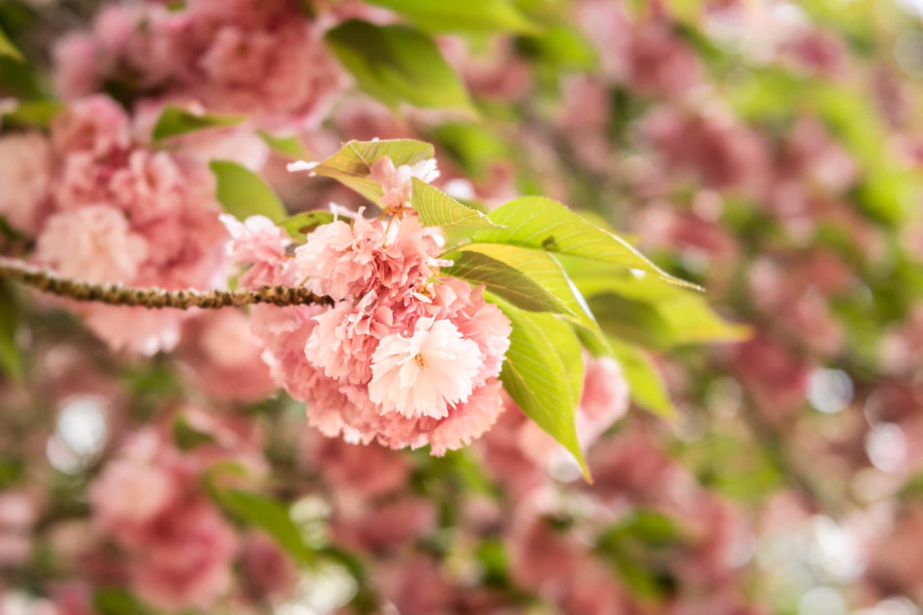2018.04.25 Norfolk Botanical Gardens © Jennifer Carr Photography Virginia Beach-8.jpg