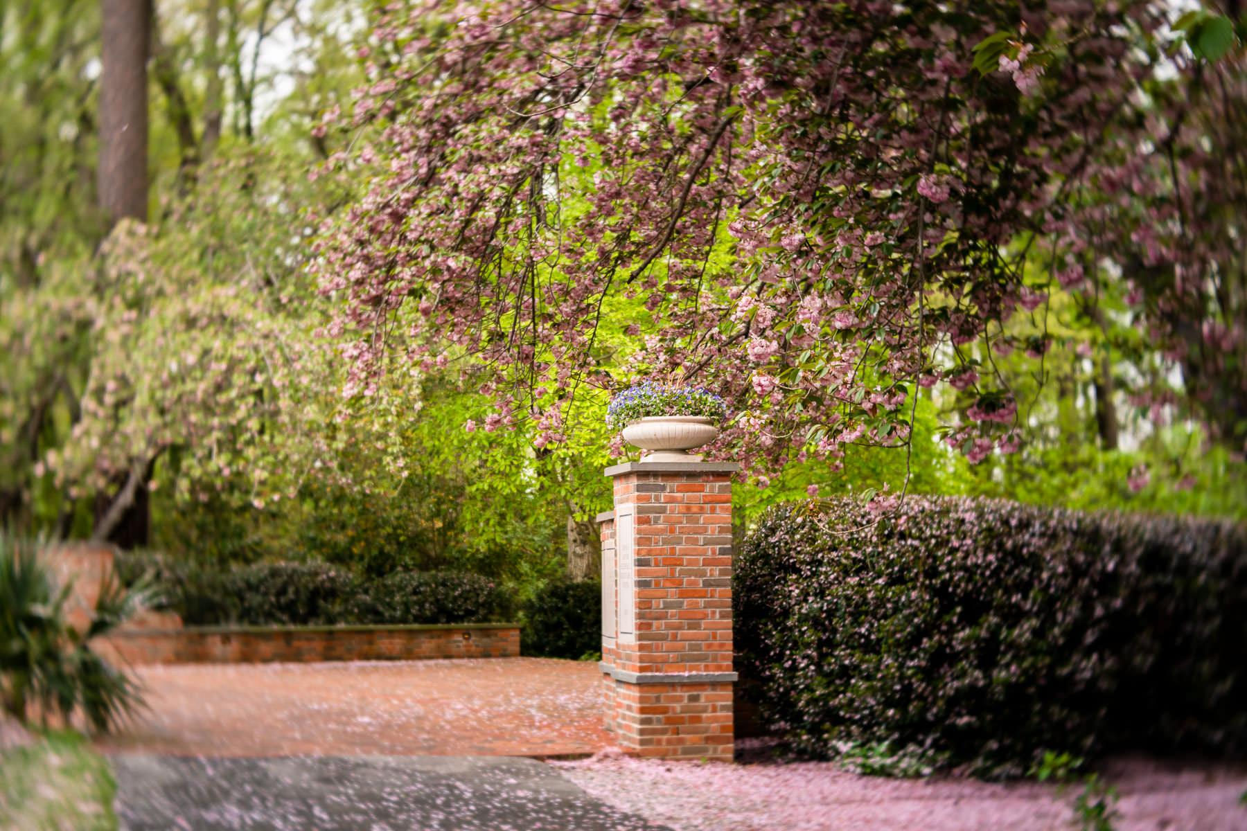 2018.04.25 Norfolk Botanical Gardens © Jennifer Carr Photography Virginia Beach-7.jpg