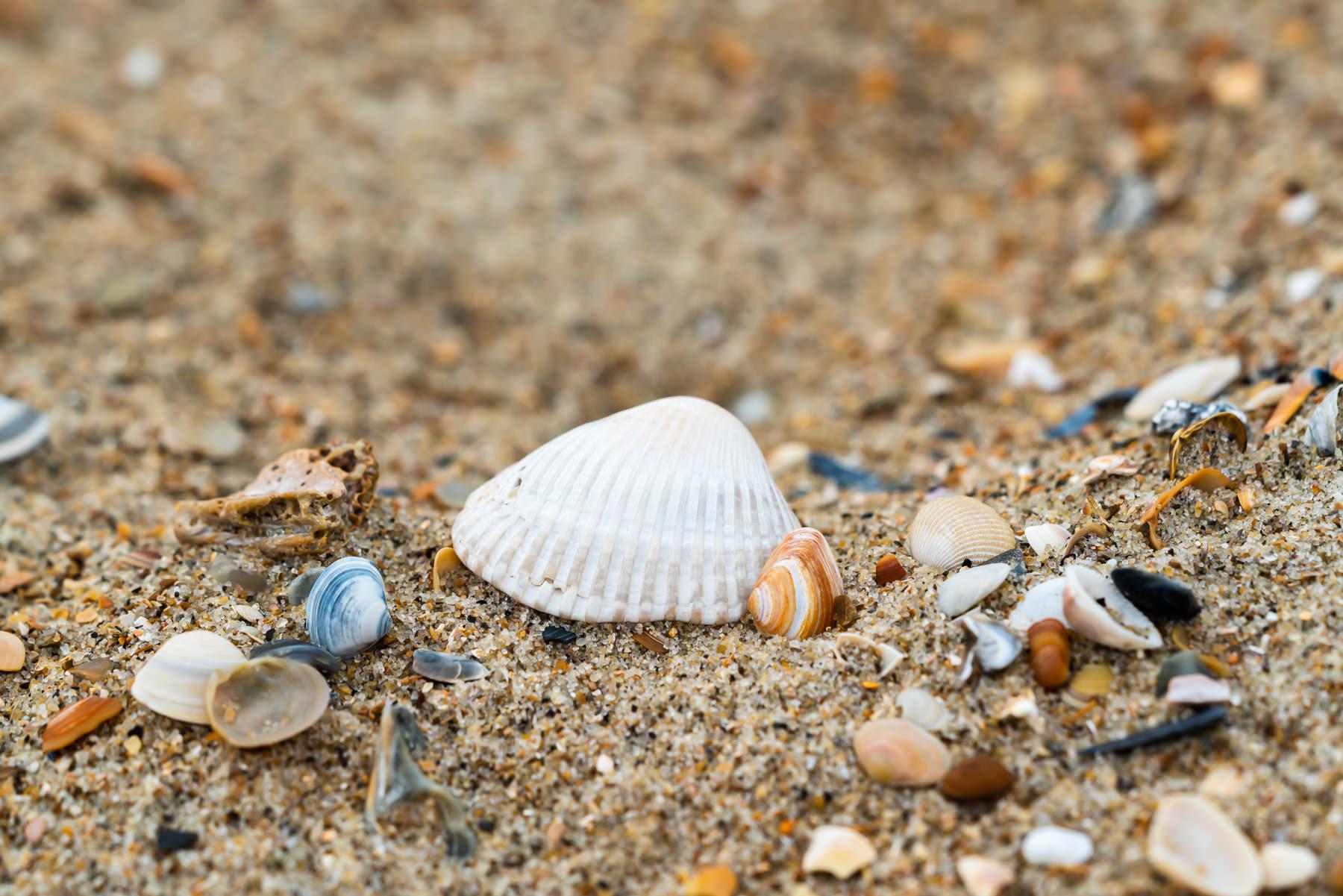 2018.05.30 Shells in Buxton © Jennifer Carr Photography-1.jpg