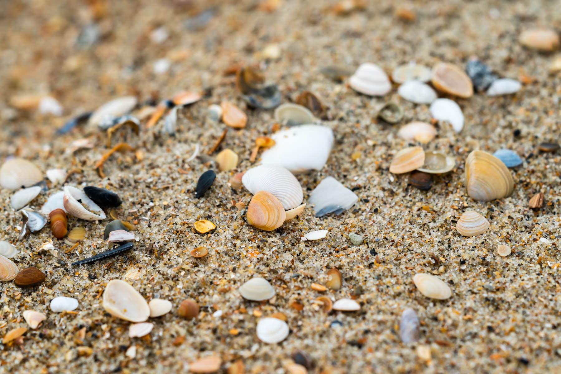 2018.05.30 Shells in Buxton © Jennifer Carr Photography-2.jpg
